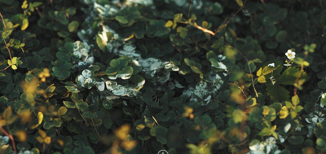 Hedge 02